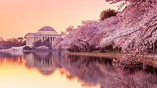 https://roadscholar-iv-prod.azureedge.net/publishedmedia/14ts4qzi29ne3ugra60y/12392-washington-d.c.-jefferson-memorial-cherry-blossoms-smhoz.jpg