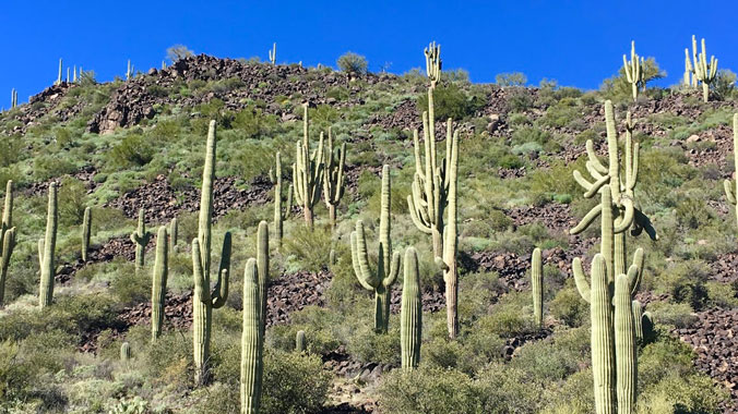 On the Road: Saguaro, Joshua Tree & Death Valley National Parks