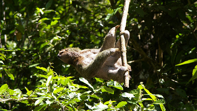 Sloths & Snorkels: The Best of Panama With Your Grandchild