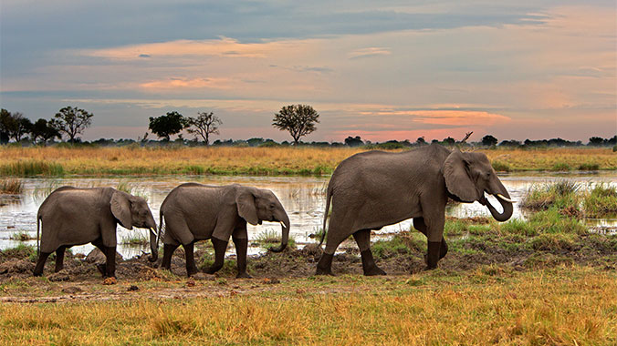 Safari by Water & Land: Zimbabwe, Namibia & Botswana