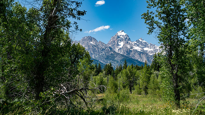Living and Learning: Discover the Tetons through the Murie Legacy