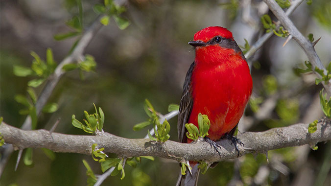 The Specialty Birds of South Texas: The Big Enchilada of Birding