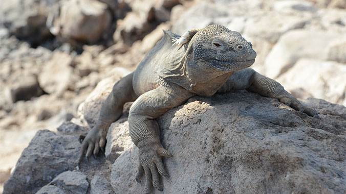 Galapagos at a slower pace