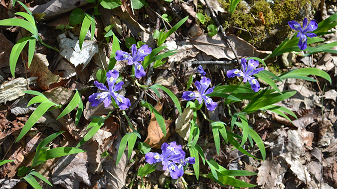 A Wildflower Quest in the Mountains of Western North Carolina