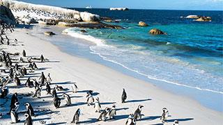 South Africa Boulders Beach