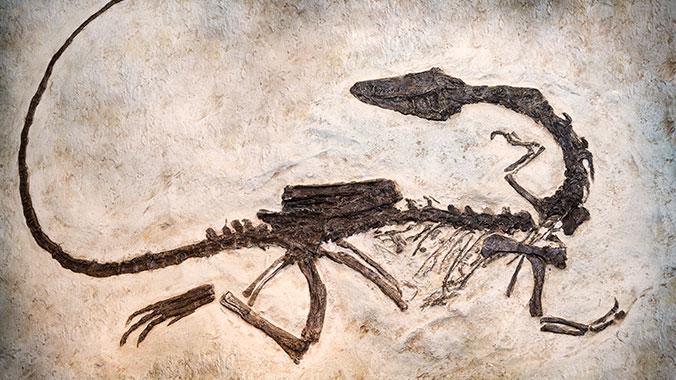 how to make dinosaur bones