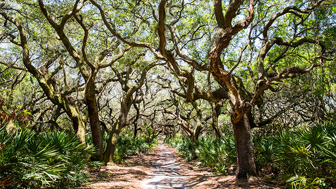 Historic Amelia & Secluded Cumberland: Island Adventures