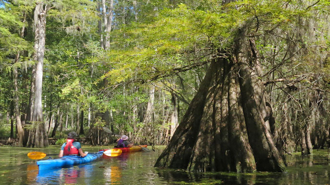 South Carolina kayaking the Lowcountry