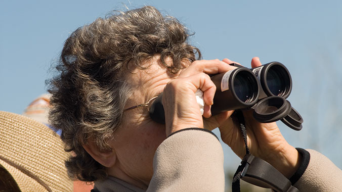 Birding on the Outer Banks: Coastal Forests & Island Sanctuaries