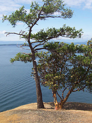 Washington's San Juan Islands at a Slower Pace