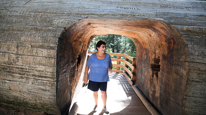 California National Park Medley:  From Giant Sequoias to Coast Redwoods