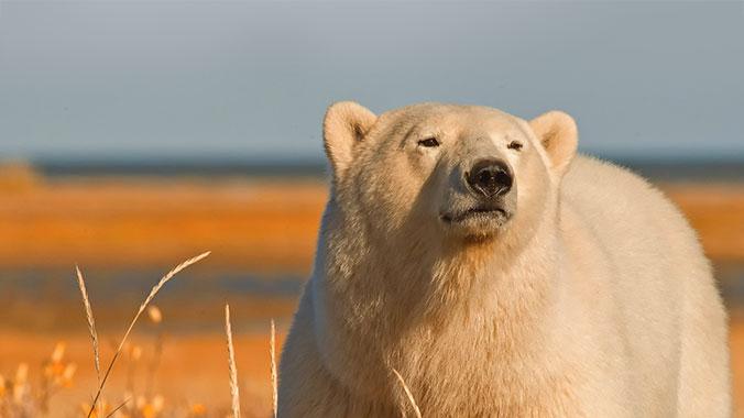 Wildlife in Churchill: Summer in Canada's Sub-Arctic