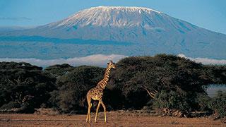 https://roadscholar-iv-prod.azureedge.net/publishedmedia/lc1iw0o8svrwow71wgls/18783-Best-Of-Kenya-Tanzania-Safari-Giraffe-Kilimanjaro-SmHoz.jpg