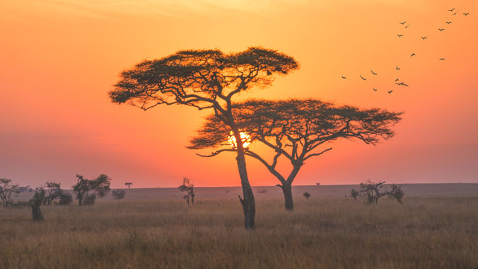 The Best of Kenya and Tanzania: A Classic Safari - Women Only