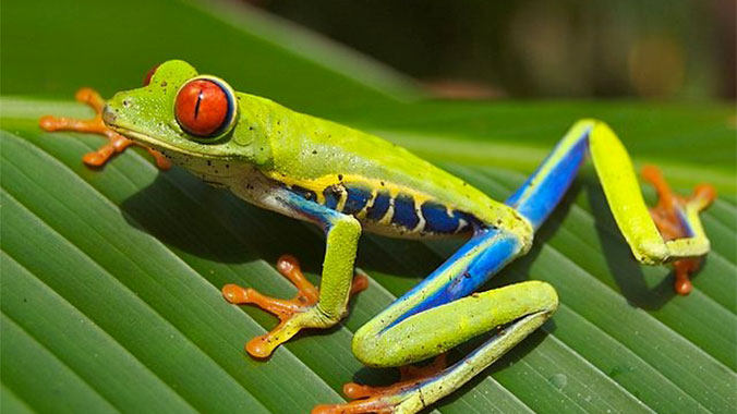 The Wildlife of Panama and Costa Rica