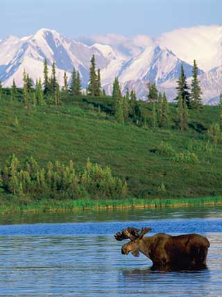 Online Lecture: Life in Denali