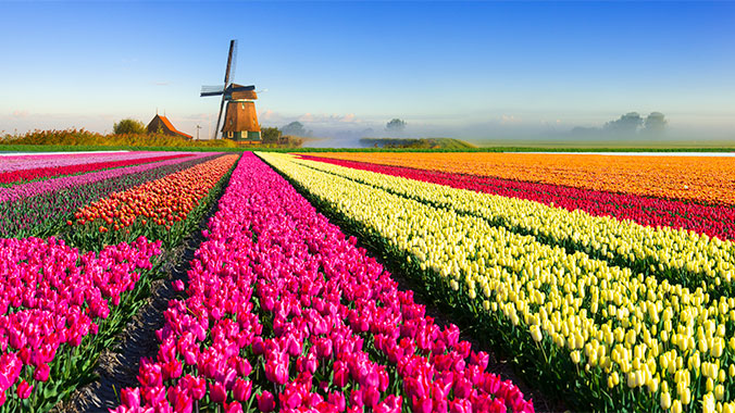 Bountiful Holland by Riverboat: Tulips & Parks at a Slower Pace