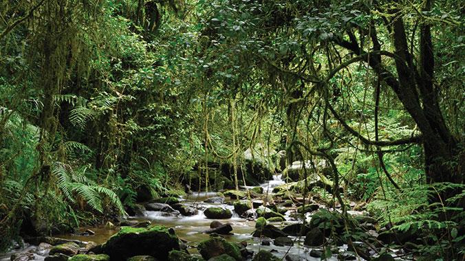 Madagascar Educational Travel | Road Scholar