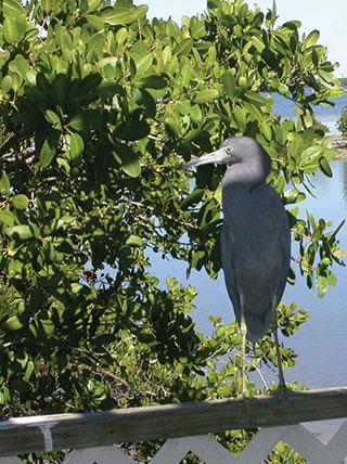 Kayaking Coastal Waterways: Sanibel & Southwest Florida Coastline