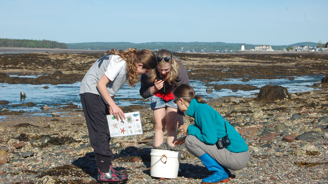 Phenomenal Fundy: Marine Biology Camp With Your Grandchild