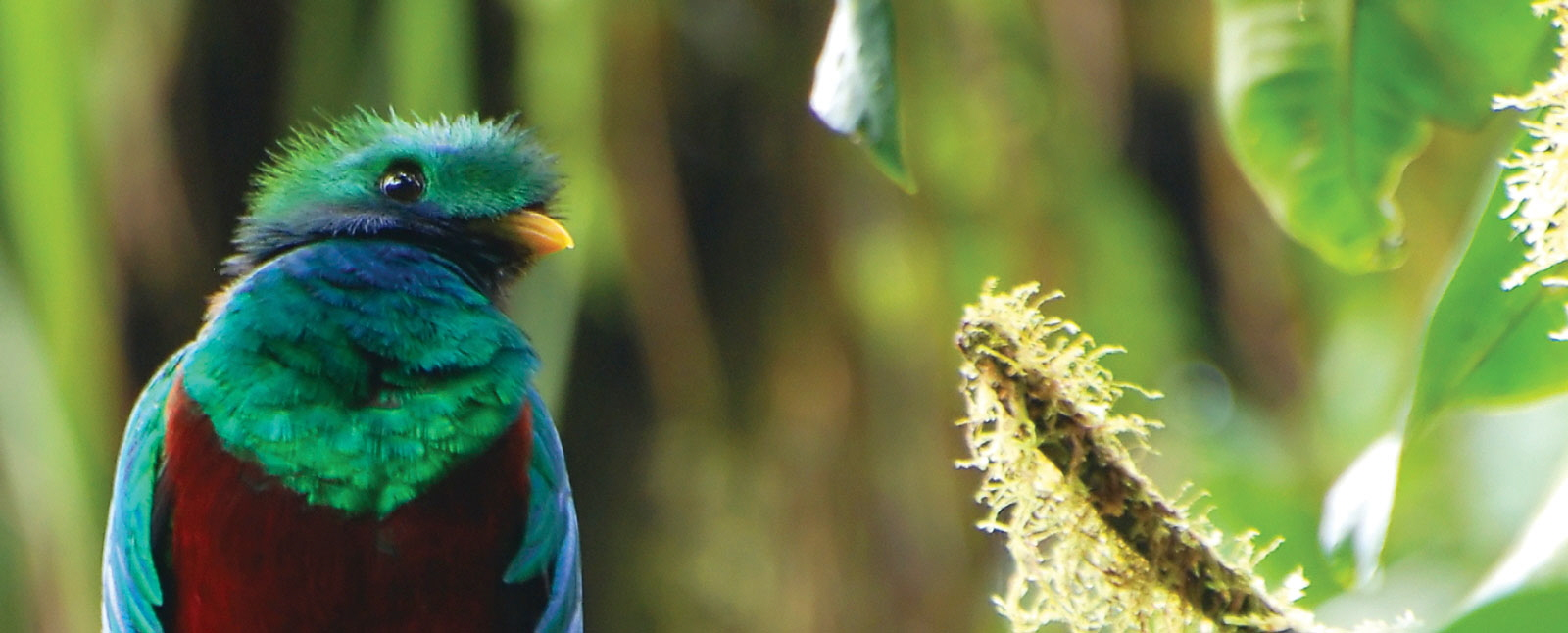 In Depth Birding Tours