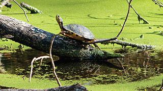 https://roadscholar-iv-prod.azureedge.net/publishedmedia/s0bk6bzvei5hz8w4pv92/11603-florida-amelia-cumberland-islands-okefenokee-swamp-smhoz.jpg