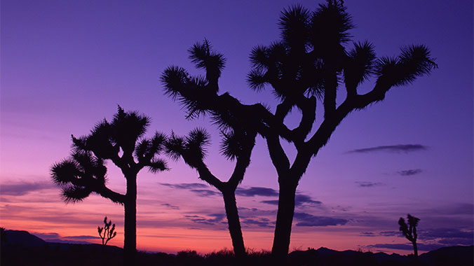 Hiking the High Desert: Joshua Tree National Park
