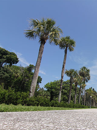 Epworth by the Sea: St. Simons & Jekyll Islands