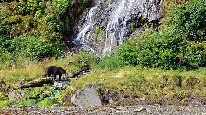 The Last Frontier: A Local Look into Alaska's Coastal Wilderness