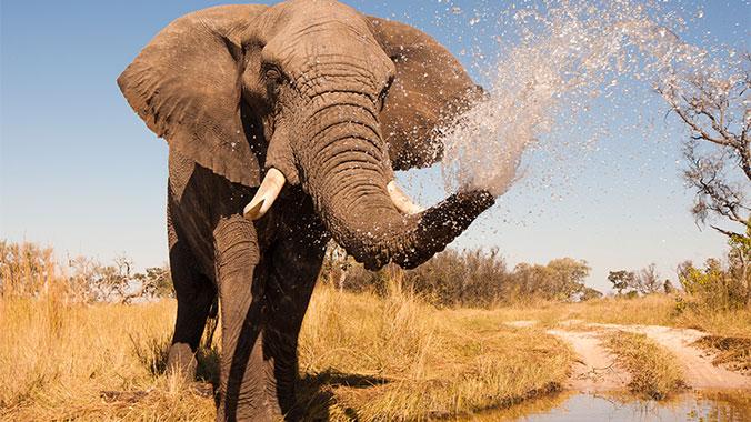 Southern Africa Birding Safari