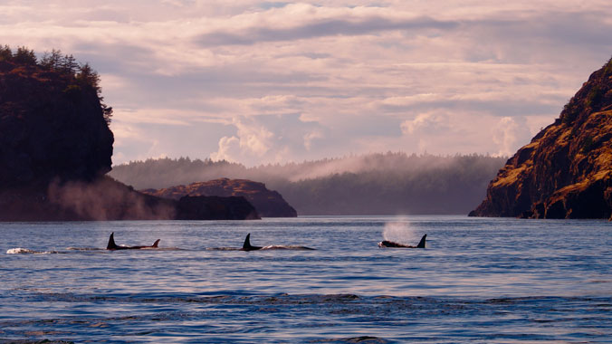 Our Changing Planet: Orcas & Ecosystems of the San Juan Islands