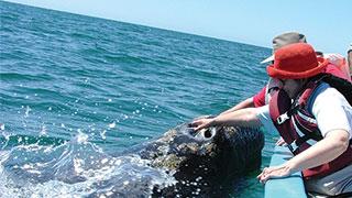 https://roadscholar-iv-prod.azureedge.net/publishedmedia/xg5gpc9rfmot810ukv50/12315-baja-mexico-whale-watch-smhoz.jpg