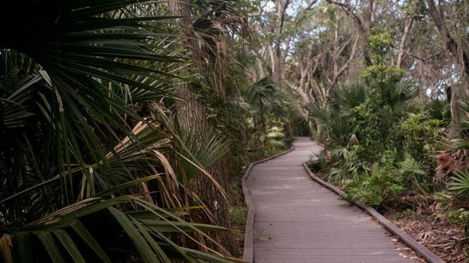 The Wild and Beautiful Animals of Florida's Nature Coast