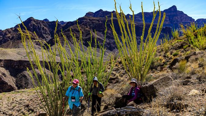Hiking Granite Gorge and Havasupai